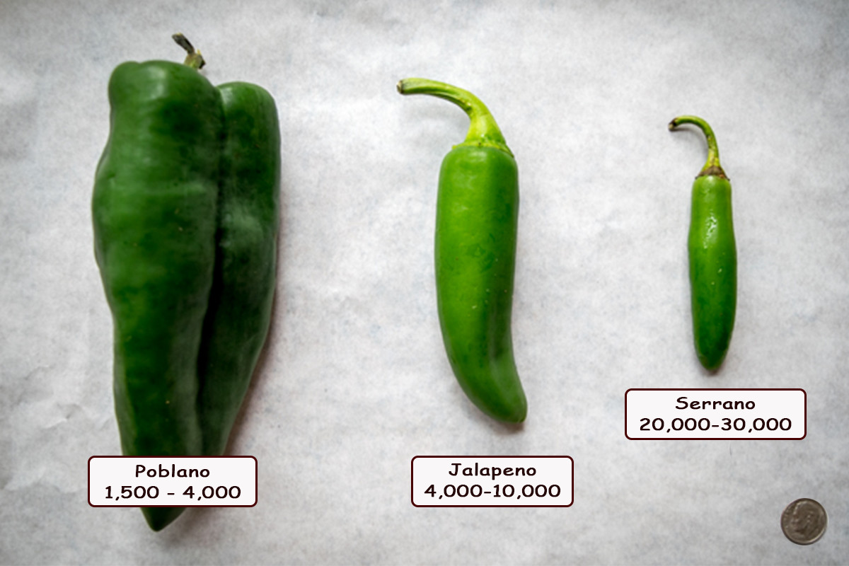 fresh chili peppers with scoville rating