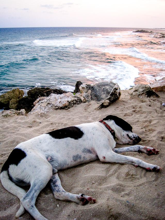 cacahuates enchilados sleeping dog