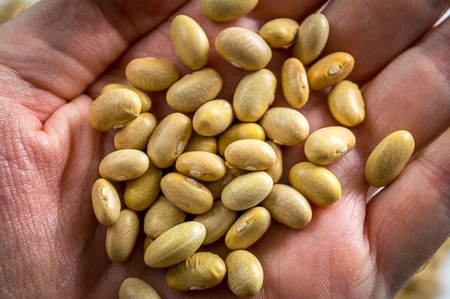 Peruano Beans (aka Canary, Mayocoba, Peruvian, Mexican Yellow Beans) mexicanplease.com