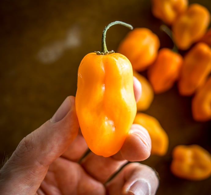 How Hot Are Habanero Peppers?