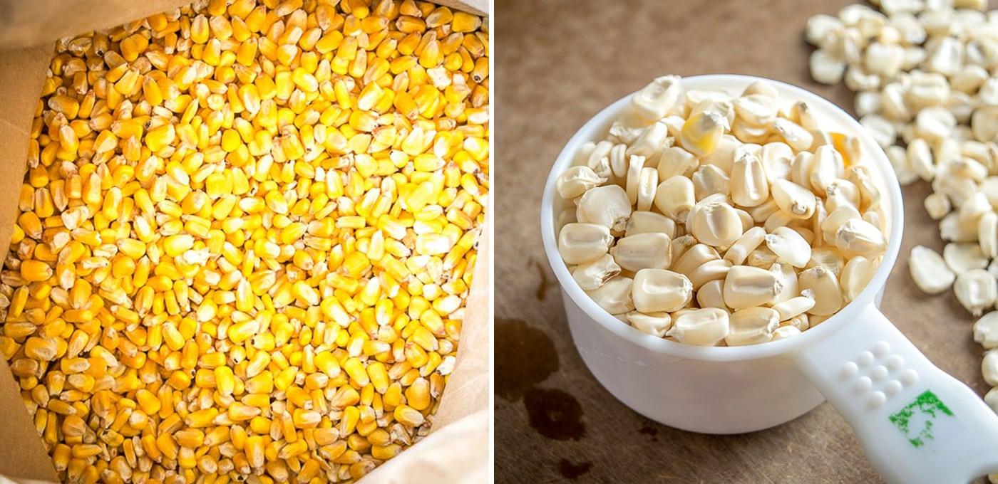 Two varieties of field corn